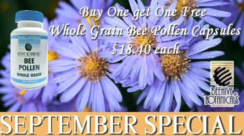 September Special Buy one Get one Free
